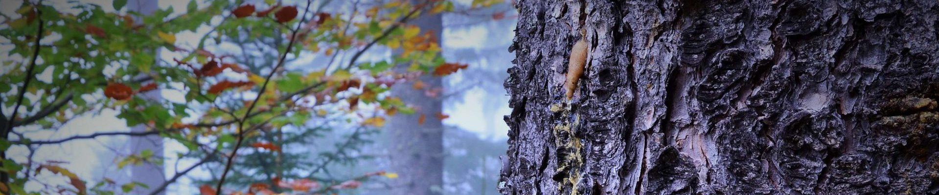 JAGAHANS - Infoblog zu Jagd, Natur und Freizeit