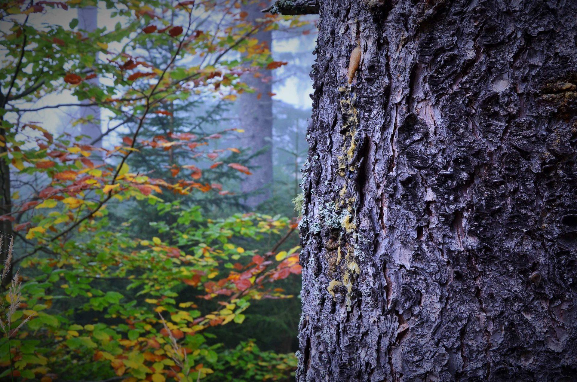 Der Wald – darf er von jedem und zu jeder Zeit betreten werden?
