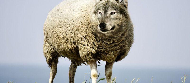 Der Wolf & was die Geißlein in Facebook schrieben – Heinz Bayer Salzburger Nachrichten