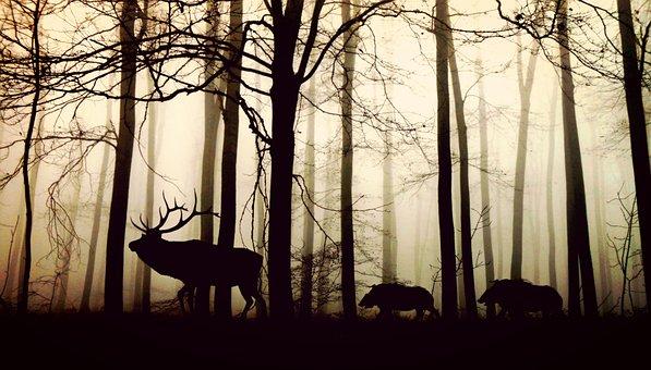 Unser Wild ist nicht an allem schuld!