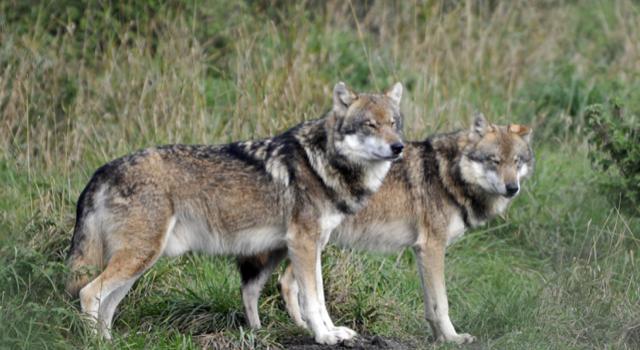 Faulenzer-Tierschutz – nichts für Jäger …